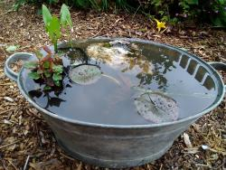 Container ponds - Create your own pond in a pot