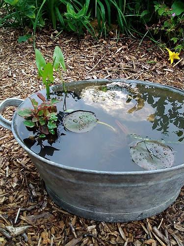 Small container pond pack - pond in a pot