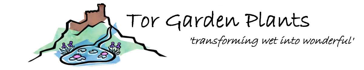Tor Garden Plants - specialist nursery for pond, marginal and moisture loving plants